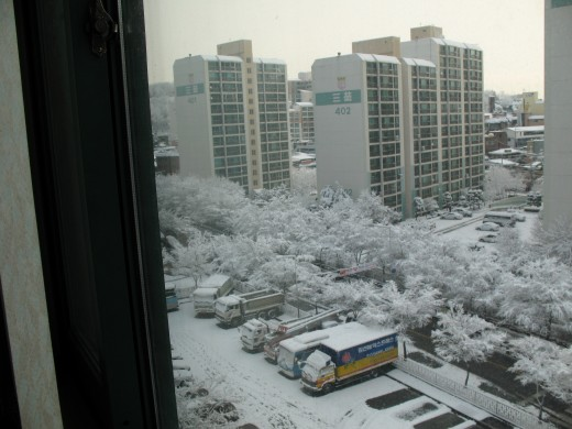 snowy view from my window