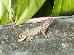 Cute Lizards that are everywhere