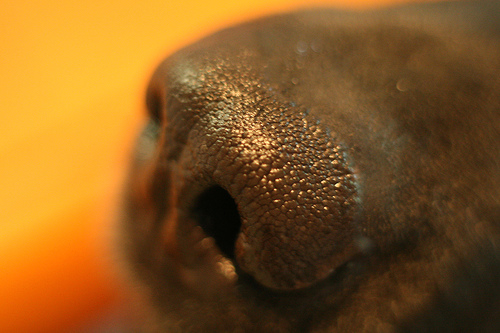 Doggy nose by Johnny Adams