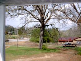 A familiar tree