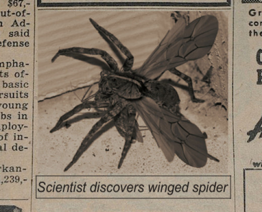Did scientists discover a winged spider. If so then it will really run people with arachnophobia crazy.
