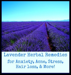 Alternative Herbal Remedies: Natural anxiety treatments with lavender