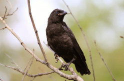 Oak Tree and Crow: An Agnostic Awakens