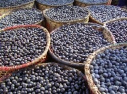 Where To Buy Acai Berries