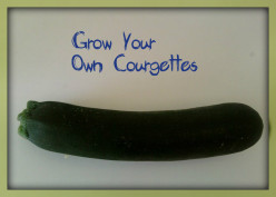 Tips on how to grow courgettes(zucchini): Grow your own vegetables in pots