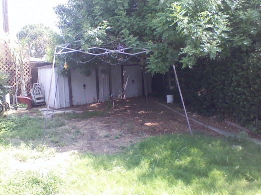 The gazebo acts as a brace for the overgrown tree limbs for privacy purposes.