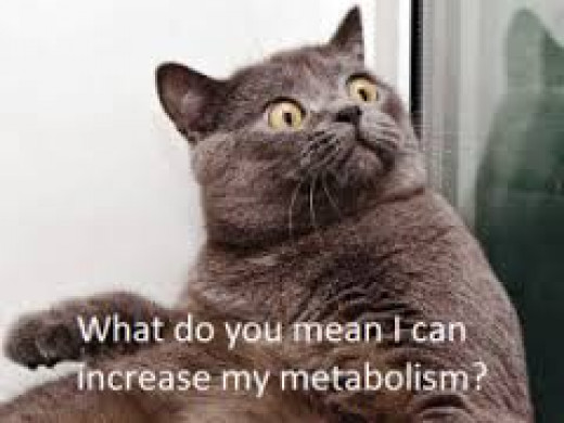 I can boost my metabolism
