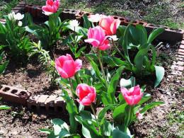 In the flower garden