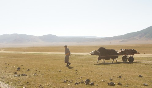 A nomad leading a yak cart crossing the plain near Terkh