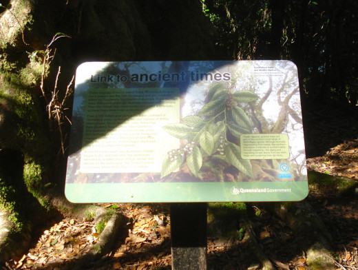 The Information Board by the Antarctic Beeches
