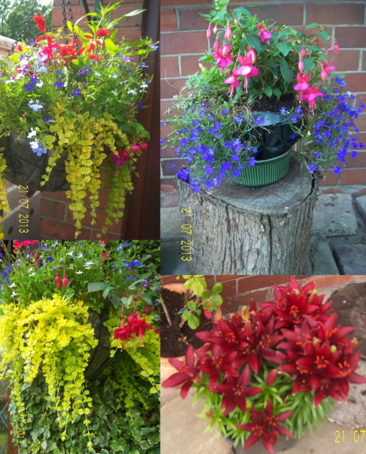 My hanging baskets - July 2013