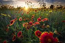 Field of wild flowers at dawn
