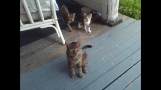Here's Dixie with Tiger and Callie on July 16th.