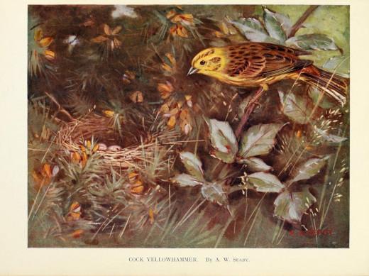 Birds through the year {1922}
