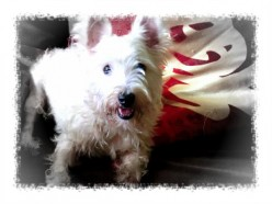 Knowing what annoys or pleases our dogs: building lasting relationships