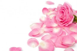 Rose petals for your lady