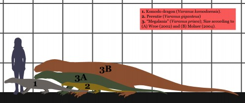 Size comparison between Komodo dragon, perentie, and Megalania.