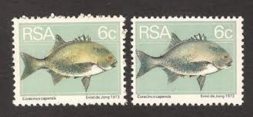 Galjoen - National fish