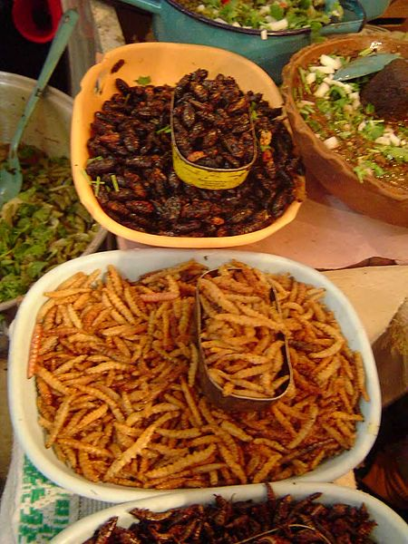 In many cultures insects are considered a delicacy.