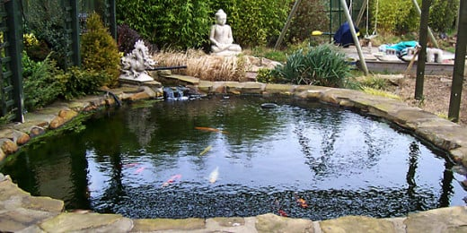 How To Maintain Your Fish Pond Guide To Selecting Proper