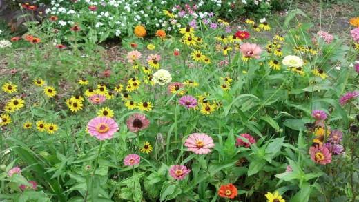 Flowers in my garden, June 2013.