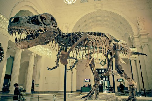 Visit The Field Museum in Chicago
