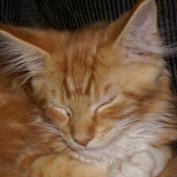 Kittymeowmeow profile image