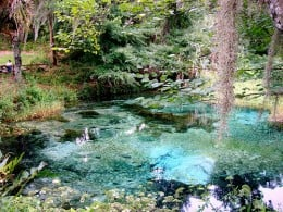 Native Florida wildlife and springs at Rainbow Springs State Park.