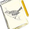Best Drawing and Art Books for Kids