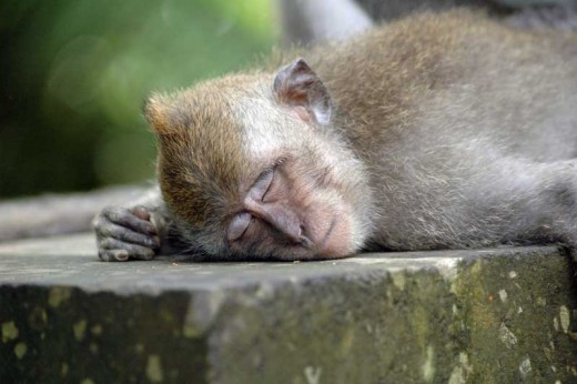 Does looking at this sleeping monkey make you feel envious? You're not alone.