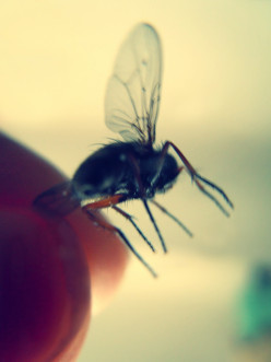 Shooing a Pesky Housefly is Never Enough