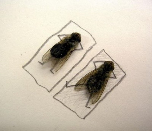 Do flies sleep?