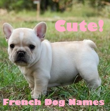 Cute French Dog Names for a Papillon or French Bulldog!