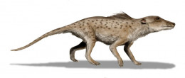 Pakicetus inachus, a whale ancestor from the Early Eocene of Pakistan, after Nummelai et al., (2006), pencil drawing, digital coloring