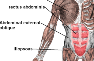Train Abdominal Muscles