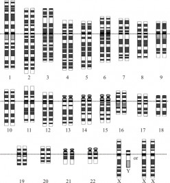 The Enigma of the 23rd Pair of Chromosomes