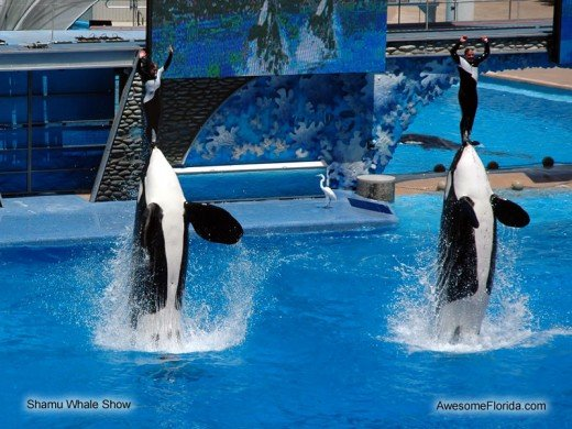 "Orcas perform with trainers in the water in SeaWorld's previous show ""Believe"""