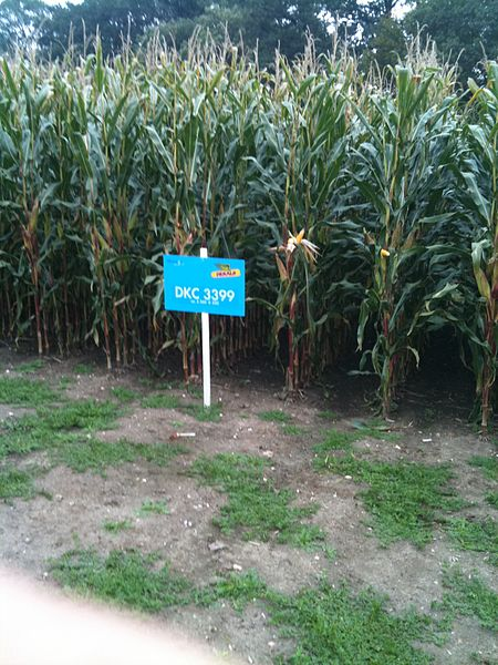 Dekalb_Monsanto_zea_mays  Slowly Monsanto is taking ownership of our food supply
