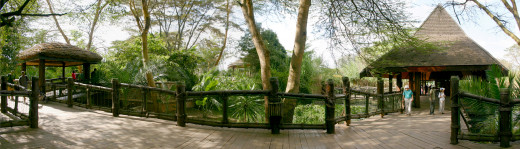 The Safari Walk is the more relaxed way of enjoying Kenyan wildlife!