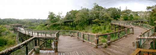 The Safari Walk is extensive and offers great views of the park.