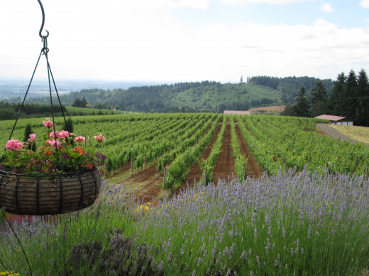 The view from Black Walnut Inn, Willamette Valley
