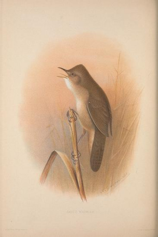 The British Warblers  !907-1914}Courtesy of the BHL
