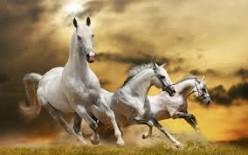 On White Horses.