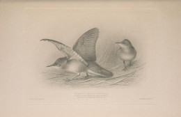 British warblers {1907 -1914} courtesy of the BHL