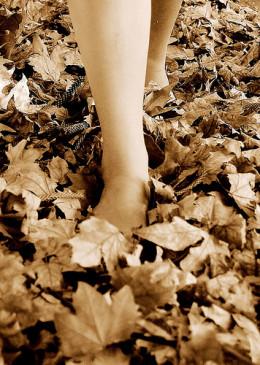 Walking in autumn from Fiona Braendler  flickr.com