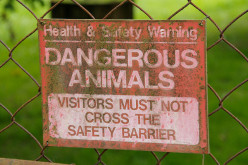 Which are the 10 most dangerous animals in the world?