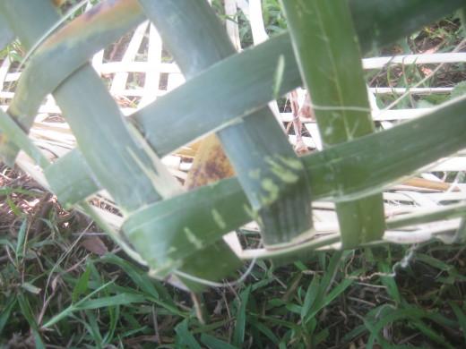 Two adjacent bamboo splits should intercross (Photo Source: Ireno Alcala)