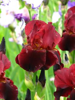Easy-to-Grow Flowers for the Beginning Gardener