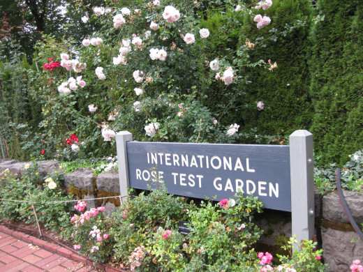 Stop and smell the roses in the Rose City, gratis.