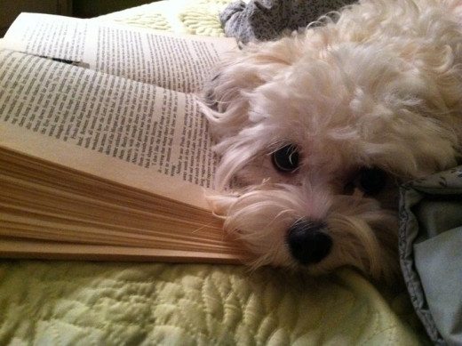 I'm a great page holder!